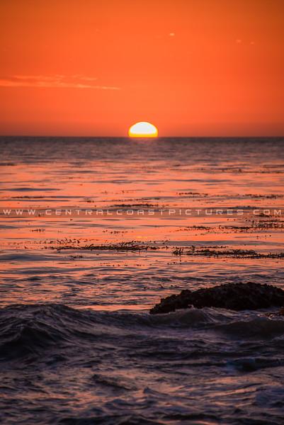 shell beach-1545
