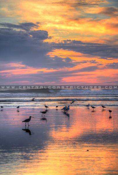 birds sunset_0446