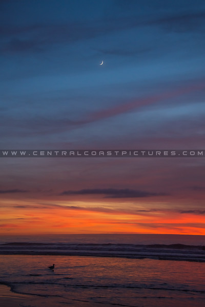 pismo moon sunset 7471