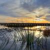 pismo-beach-duck-pond_9810