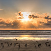 pismo sunrays 1722-