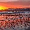 pismo pink sunset-5266