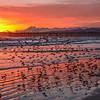 pismo pink sunset-5266