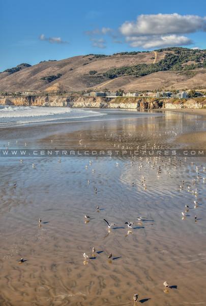 pismo beach low tide 0188