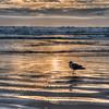 beach sunrays 2762-
