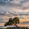 lone tree pismo preserve 2050-