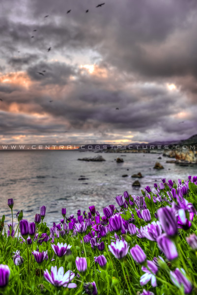 pismo shell beach cliffs 8505-