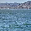 pismo dolphin 5133