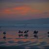 pismo birds sunset 7385