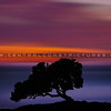 lone oak blur sunset 2401-