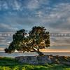 lone tree pismo preserve 2138-