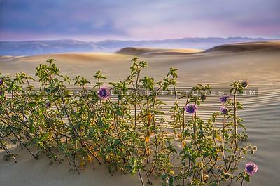 dunes sunset_8016e