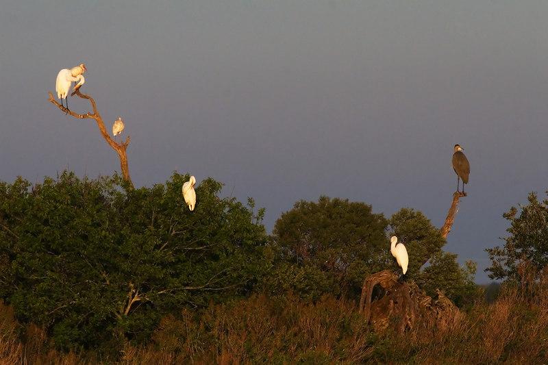 Six Dry Birds