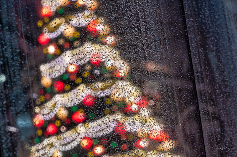 Christmas Tree Reflections in the Rain