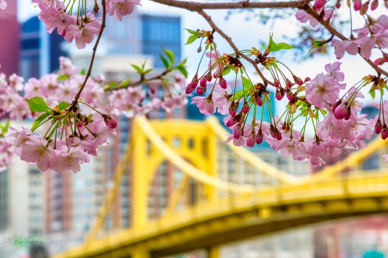 Spring Blossoms #3