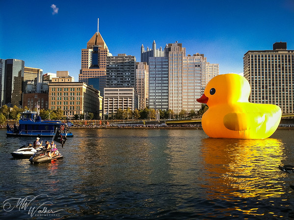 Duck Escort