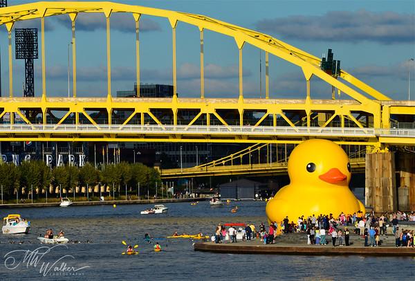 Duck visits PNC Park