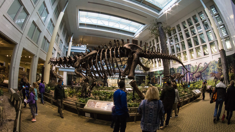 Carnegie Museum of Natural History, Oakland, Pittsburgh PA