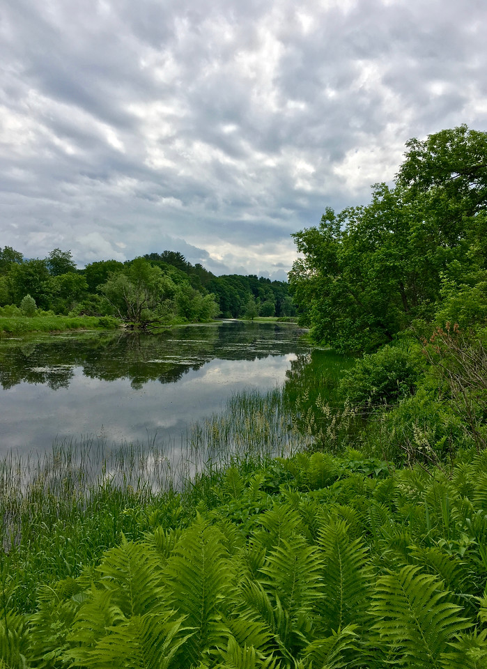 Wetlands Vista