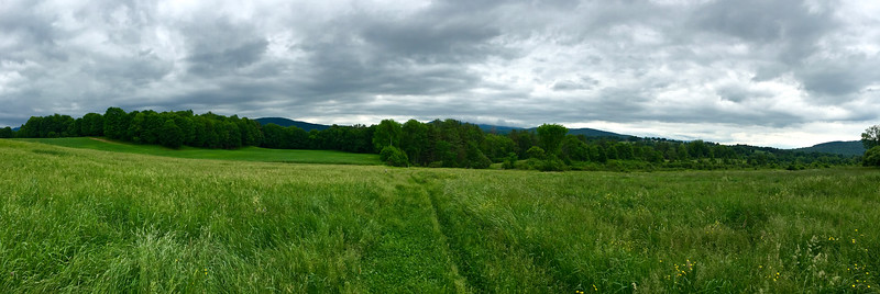 Endless Meadows