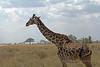 Tanzania-0737