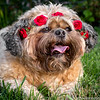 """Photo by Pixie Vision Photography  <a href=""""http://www.PixieVision.com"""">http://www.PixieVision.com</a>)"""