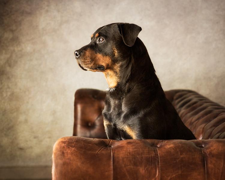 Cleo (Rottweiler)