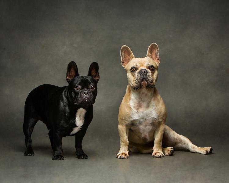 Enzo & Hugo