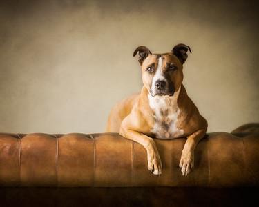 Kara Dog - super model