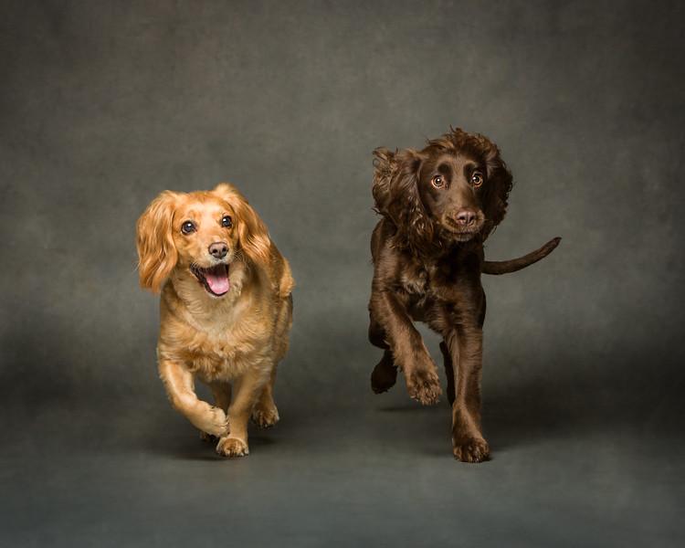 Sadie and Cassie