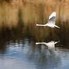 Schwanenflug - swanflight