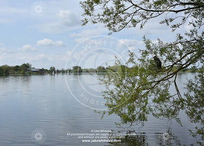2019_NeneValley_May19_04