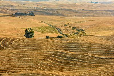 USA, Washington. Patterns and colors of the Palouse region at harvest time.
