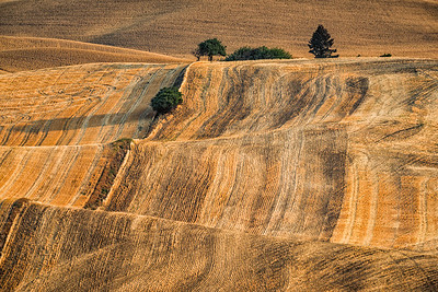 Palouse Fields, from Steptoe Butte, Steptoe Butte State Park, Washington, USA