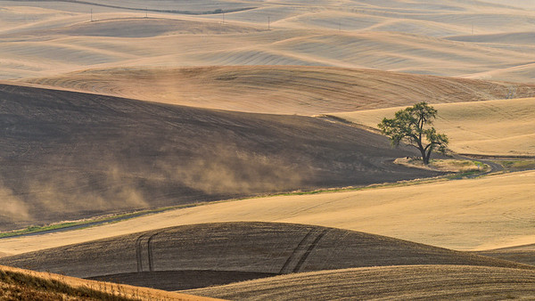 Palouse fields, lone tree and dust viewed from Steptoe Butte, Steptoe Butte State Park, Washington, USA