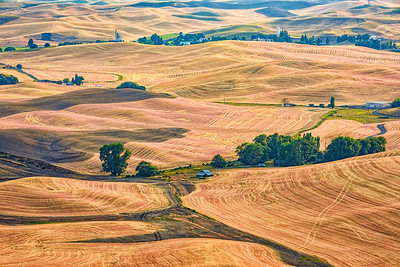 Palouse Fields, from Steptoe Butte, Steptoe Butte State Park, Washington, USA.