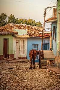 Cuba, Trinidad.  A horse and dog interact on a residential strret in the historical area of Trinidad, UNESCO, World Heritage Site