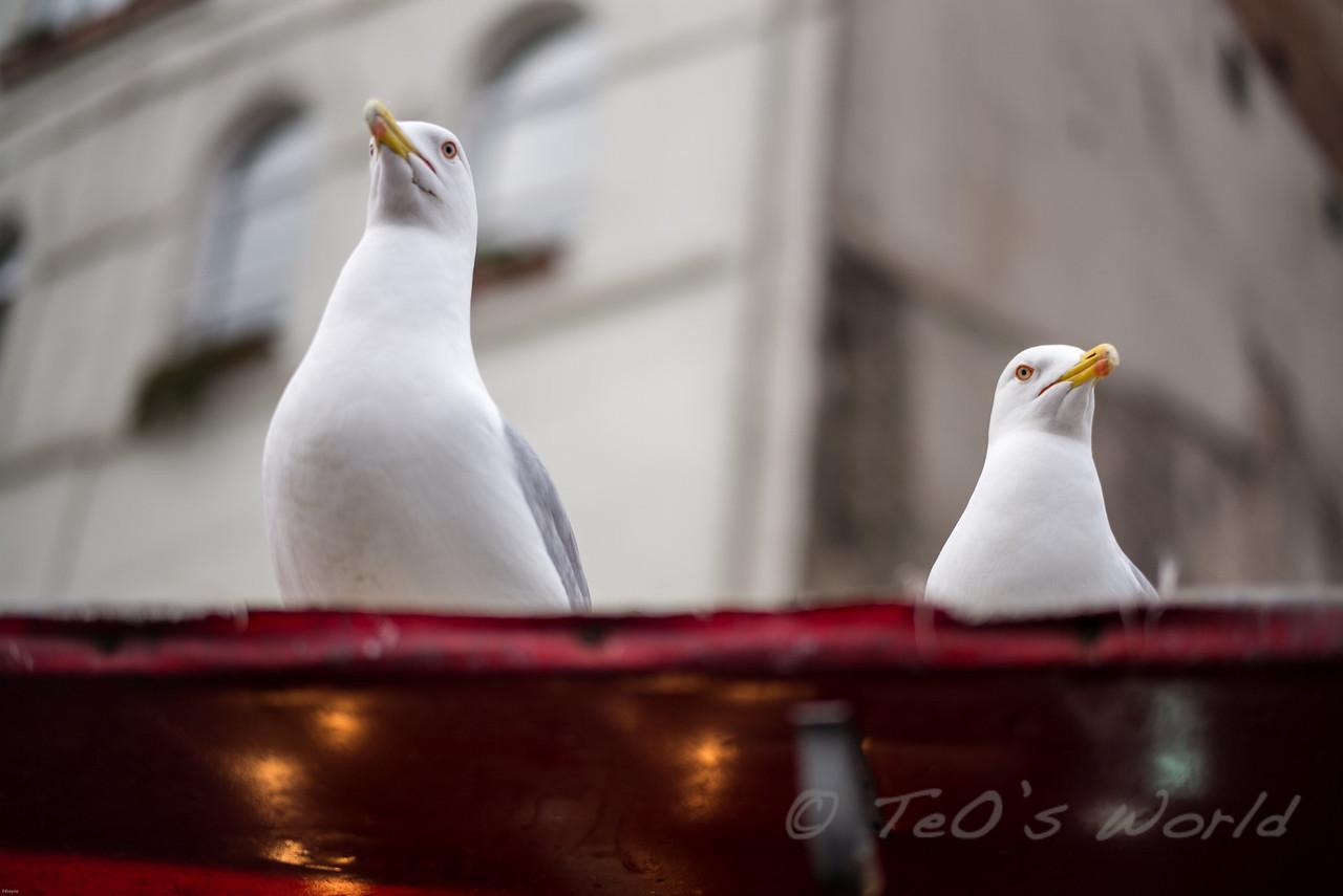 The Fishmarket guards