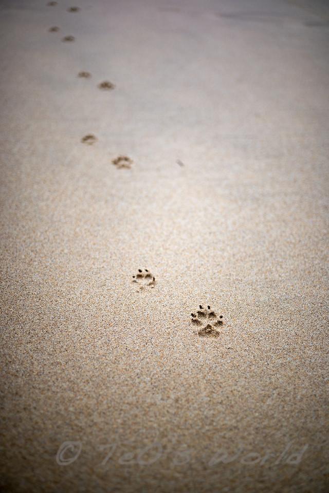 Walking on San Joao Beach