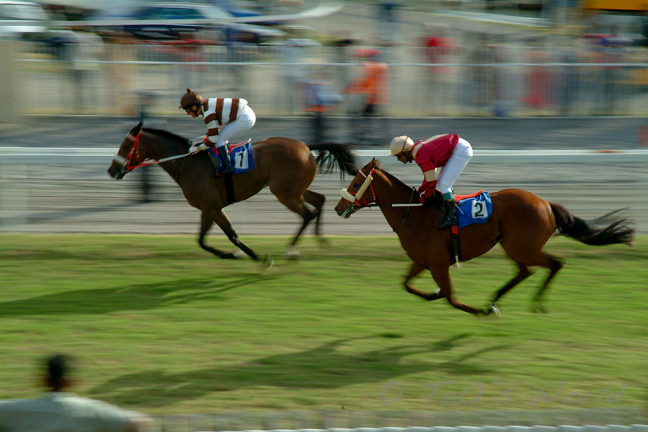 Course à l'Hippodrome de Port-Louis 2