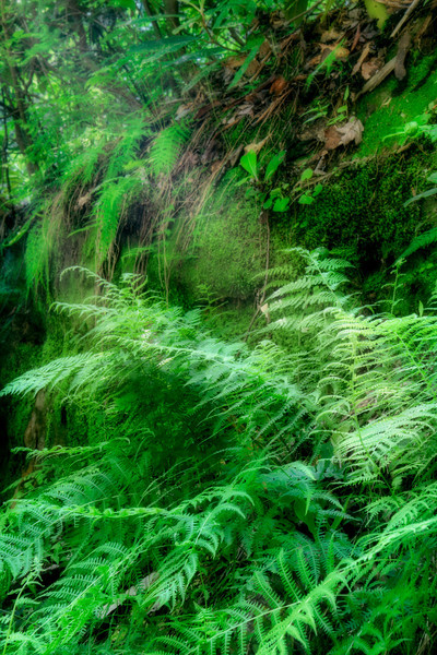 """Fern Light""<br /> Natural Bridge State Park"
