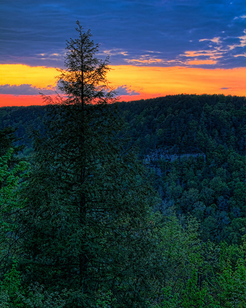 """Sunset Pine""<br /> Falls Creek Falls State Park<br /> Spencer, TN"