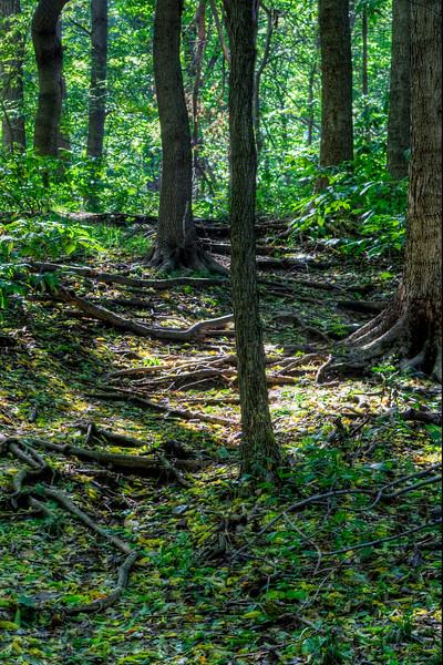 John James Audubon State Park<br /> Henderson, KY