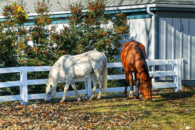 Kentucky Horse Park<br /> November 2009
