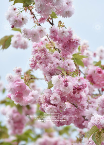 2019_Blossom_May19_13