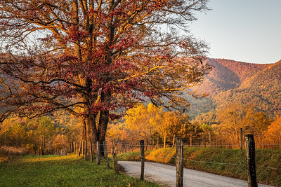 USA, Tennessee., Cades Cove, Golden autumn landscape with red tree at sunset, Great Smoky Mountains National Park.