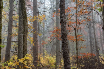 USA, Tennessee., Cades Cove, Scenic autumn landscape of colorful trees on a foggy morning ,  Great Smoky Mountains National Park.
