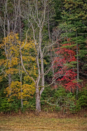 USA, Tennessee., Cades Cove, Scenic autumn landscape of colorful trees,  Great Smoky Mountains National Park.