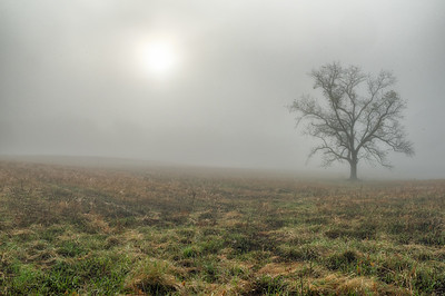 USA, Tennessee., Cades Cove, Lone tree in fog on a hille with sun in the sky, Great Smoky Mountains National Park.