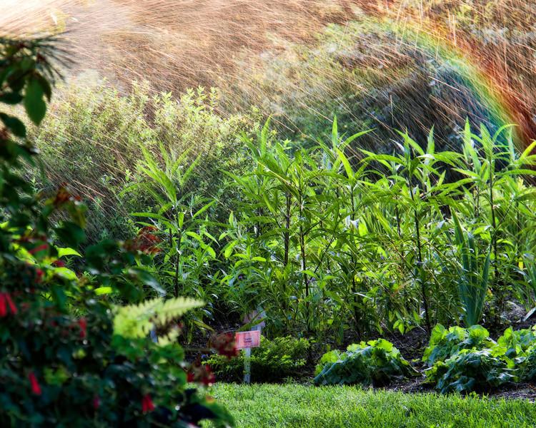 """""""Watering the Garden"""""""